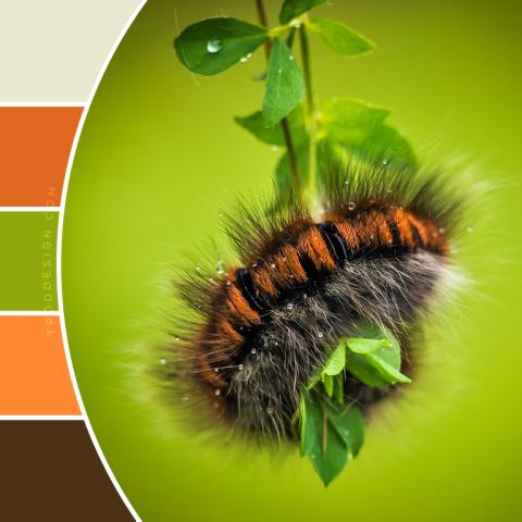 Caterpillar color schemes