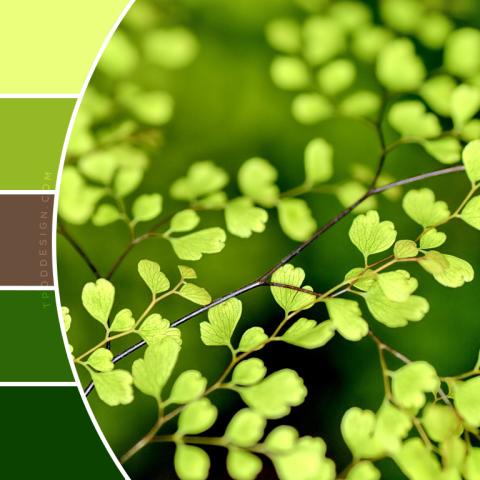 Leaves Color Schemes