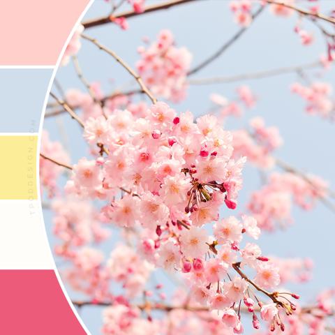 Cherry Blossom Color Schemes