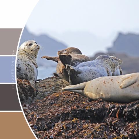 Seals color schemes