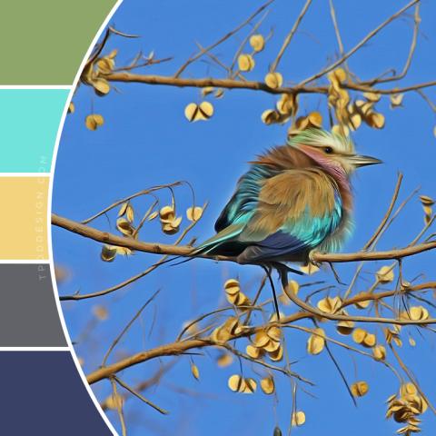 Spring Bird Color Schemes