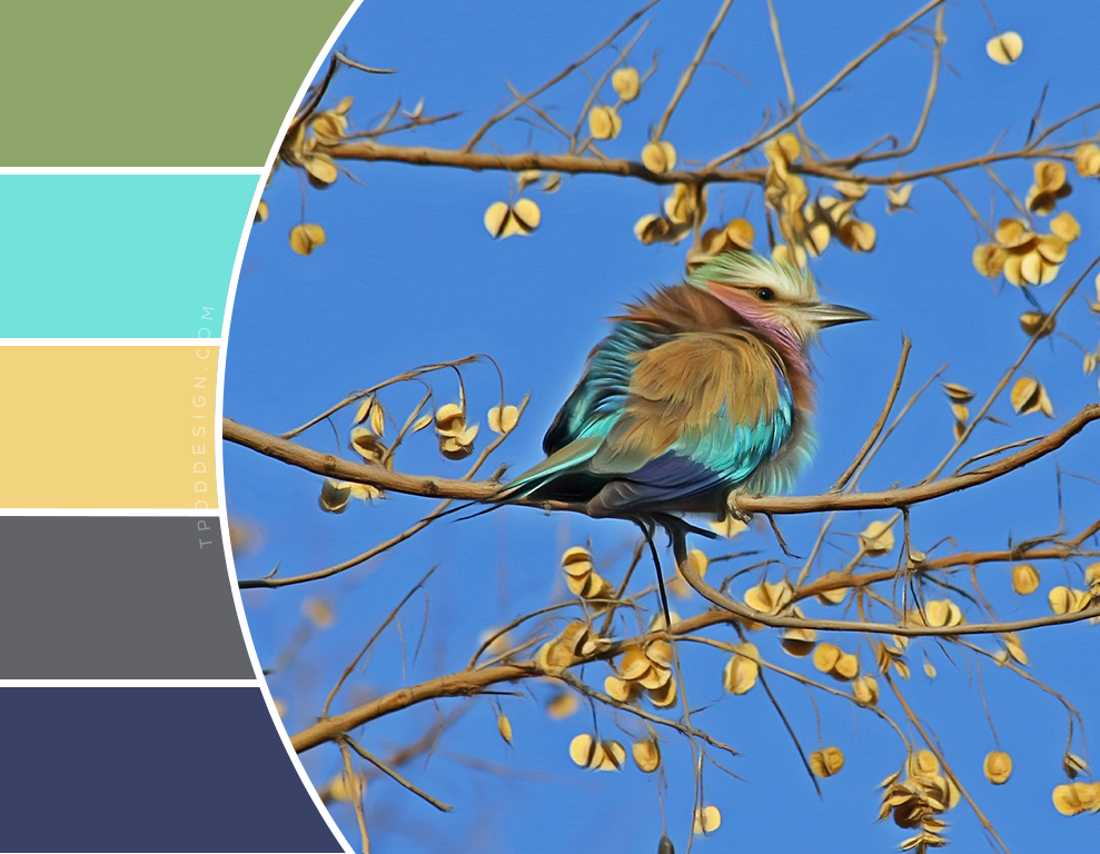 Spring Bird Color Schemes